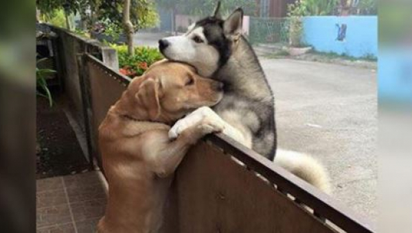 Pes utíká z domu za svým kamarádem. Když se zvířata nakonec setkají, nedokážeme zadržet slzy