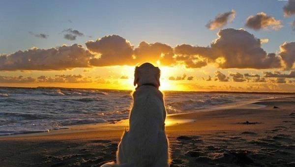 Psi nikdy neumírají. Oni prostě spí v Tvém srdci. Každý milovník zvířat by to měl přečíst!
