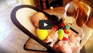 Pes ukradl dítěti oblíbenou hračku, pak se ale cítil provinile a drobečkovi se o