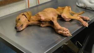 Rodina zachránila psa. Netušila, jak se jí odvděčí.