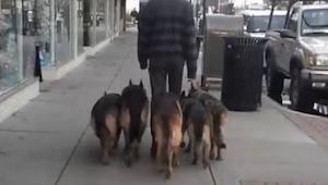 Vidíte těchto 5 psů? Vidíte někde vodítko? Protože já ne!