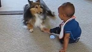Nikdo by nevěřil, že jejich pes udělá dítěti tohle. Video jako důkaz!