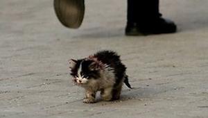 Všichni lidé se báli dotknout této kočky a on ji tehdy vzal do náruče a stalo se