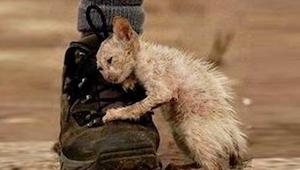 Našla kotě, které bylo ve strašném stavu, když mu pomohla, stalo se něco, co jí