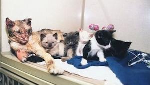 Příběh kočky, která pětkrát prošla skrze plameny, aby zachránila svá koťata z po