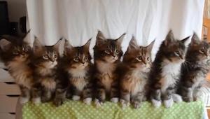 Toto nejsou obyčejné kočky! To, co dělají, nedokáže žádná jiná kočka.