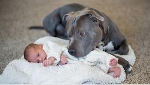 Bál se, že pes jeho manželky ublíží jeho dceři, to, co se stalo potom, ho úplně