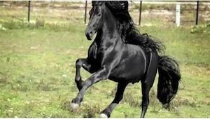Říká se, že je to nejkrásnější kůň na světě. Po shlédnutí videa s tím naprosto s