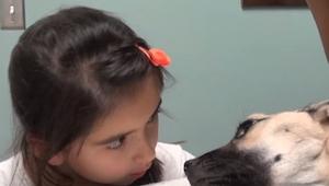 Holčička se podívala do očí umírajícího psa a to, co se stalo pak, je zázrak!