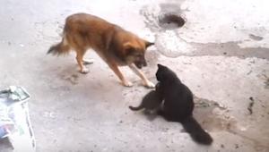Pes se přiblížil ke kočičí mámě s koťaty a to, co se stalo později, snad dojme k