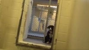 Reakce psa, který si právě uvědomil, že byl adoptovaný... NEOCENITELNÁ!