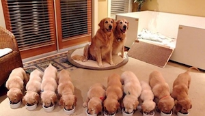 Podívejte se na galerii 15 nejsladších fotek psů a jejich dětí. Číslo 11 je přes