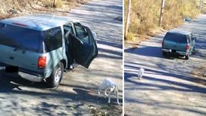 Vyhodil z auta psa a odjel... To, co se stalo později, je opravdový zázrak!