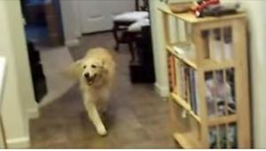 Jeho majitel řekl pouze jeden povel. Neuvěříte, co pak udělal tento pes!