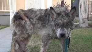 Veterinář zachránil psa, který umíral hlady. Jenomže... to není úplně pes!