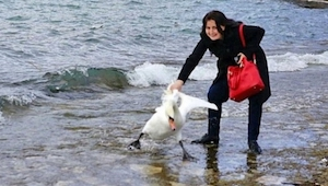 Žena se rozhodla udělat si fotku s labutí, výsledek je tragický...