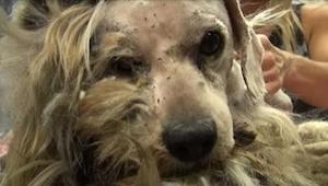 Pouliční pes prošel neuvěřitelnou metamorfózou. Neuvěříte, jak vypadá teď!