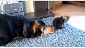 Ten pes se tak velmi chtěl spřátelit s kočkou, že až ze smíchu….spadnete ze židl
