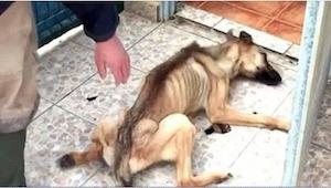 To, co udělali tomuto psu, je ostudné! Naštěstí se nám ho podařilo zachránit na