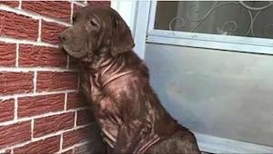 Ten pes každý den sedával na opuštěné verandě, když však k němu přistoupil cizí