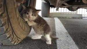 Tuto kočku našel muž pod svým autem. Když jeho žena napsala tuto sms, pro zvíře