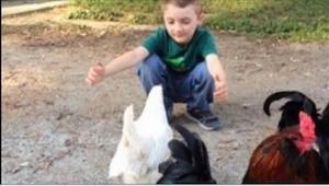 Chlapec šel přivítat svou slepici po tom, co byl u kadeřníka… Takovou reakci bys