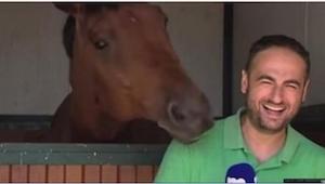 Reportér točil příběh o koních, hlavní aktér ale udělal TOTO!