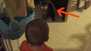 Maminka natočila, jak si její dítě povídá s kočkou. Reakce kočky v 10. vteřině?