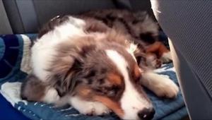 Klidně spal v autě, když něco upoutalo jeho pozornost. Počkejte až uvidíte tu re