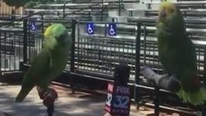 Dělala rozhovor se dvěma papoušky... reakce nemají chybu!
