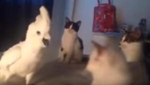 Když 3 koťátka obklíčila tohoto papouška, začal vydávat naprosto úžasný zvuk! Ne
