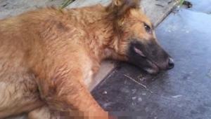 To, co se stalo tomuto psovi,  nám nejde do hlavy! Šok!