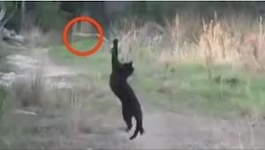 Kočka se připravovala ke skoku. Když jsem spatřila, co chce chytit, nemohla jsem