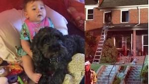 Během požáru zůstali v domě uvězněni malá holčička a její pes. Polo mohl z místa