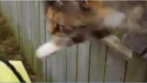 Nikdo nevěřil, že TOTO mu kočka dělá každý den, a tak listonoš vzal do rukou tel
