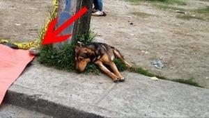 Když zjistíte, na co se dívá tento smutný pes, dojme vás to k slzám…