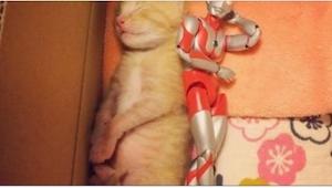 Koťátko nemělo šanci na přežití, tehdy ale dostalo hračku… To, co se děje potom,