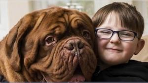 Je až k neuvěření, za co vděčí tento chlapec svému psu!
