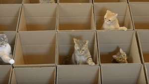 Když kočka spatří jen jednu krabici, je štěstím bez sebe, co se dá potom říct o