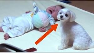 Když dítě začne plakat, přiběhne k němu pes a udělá jednu věc… vždy zabere!