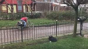 Pes se nudil sám v zahradě... tak vymyslel geniální zábavu! To musíte vidět!