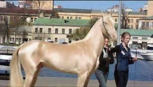 Podívejte se na fotografie toho nejkrásnějšího koně na světě, které okouzlily už
