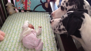 Rodiče nechali dítě se psem. Podívejte se, co našli, když se vrátili!