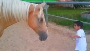 Malý chlapec se nebezpečně přiblížil k noze koně. To, co nahrála jeho matka, je