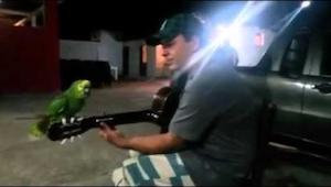 Video tohoto zpívajícího papouška se stalo hitem internetu. To musíte vidět!