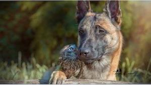Když se pes přiblížil k sově, na okamžik nám v žilách ztuhla krev. Ukázalo se, ž