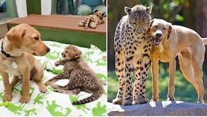 20 fotografií zvířat, která vyrostla a… ani po letech se vůbec nezměnila :)