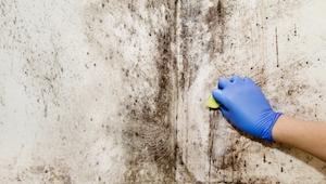 Toxická černá plíseň – 5 příznaků, že ji máte v domácnosti i vy!