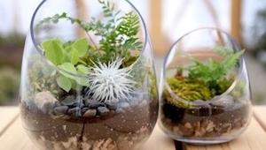 Návod, jak vytvořit svoji vlastní zahradu-terárium, je velmi jednoduchý a výsled