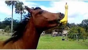 To, co dělá tento kůň, vás pobaví k slzám! Nepřeháníme :)